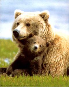 mom bear